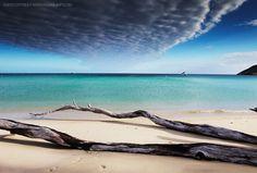 Lizards island australia