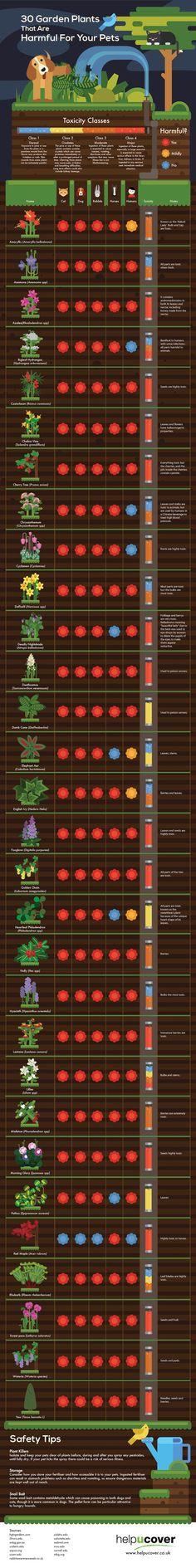 30 garden plants harmful for pets