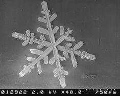 image microscope flocons de neige 22