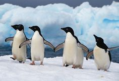 No one wears our signature colors better than penguins!  #whiteandblack