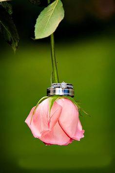 must take wedding photos wedding rings hanging on pink rose black forest photography