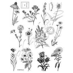 Fleurs KTZ08