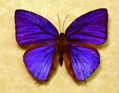 Real Purple Butterfly Quotes. QuotesGram