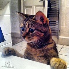 """From @Karllovescoco: """"Bath time worries We got her from a cat rescue place 3 years ago, who could resist that cat from Shrek face!! Nicknamed Cinnamon swirls, she is a cute little tabby with ginger patches, love her !!!!"""" #catsofinstagram"""