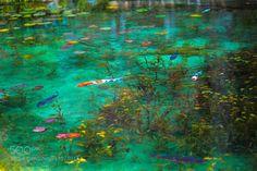 422C0426.jpg by HirokiYamaguchi1 #Underwater #fadighanemmd