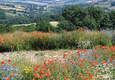 fields of wild flowers #wildflowers #field