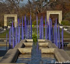 A Woman's Garden and Purple Garden Glass - Chihuly glass at the Dallas Arboretum