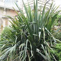 8 Best Aotearoa Nz Plants Images Plants Kiwiana Nz Art