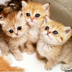 いいね!4,183件、コメント25件 ― animal loveさん(@animallove.co)のInstagramアカウント: 「Awwww From @cats_toffy_oggy Follow @animallove.co for awesome cats #kids…」