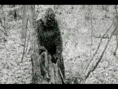Bigfoot Evidence: This Bigfoot Caught On Game Cam Near The Greenbrier Sporting Club Is Frightening Yeti Bigfoot, Bigfoot Sasquatch, Bigfoot 2017, Ufo, Bigfoot Pictures, Bigfoot Pics, Finding Bigfoot, Bigfoot Sightings, Mothman