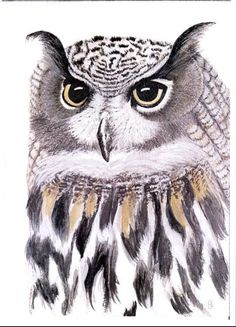 Eagle Owl.  Print from an Original Painting by Sarah Edwards. A4