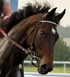 Royal Delta 2008 filly by Empire Maker - Delta Princess (A.P. Indy) Two time Breeders' Cup Ladies Classic champion