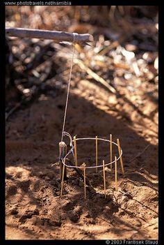 Photograph of Bird trap set up by Bushman, Namibia