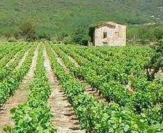 """"""" mazet """" dans les vignes en Provence"""