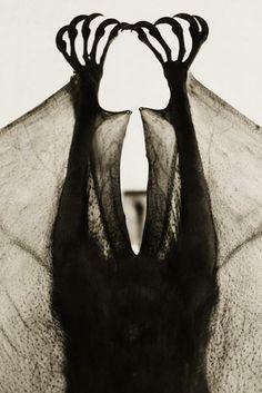 Bats  #bats