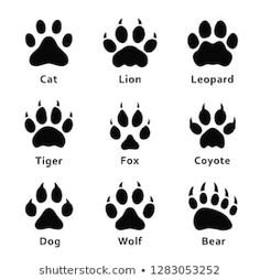 Animals footprints paw prints set of different vector image on VectorStock Cat Paw Drawing, Paw Print Drawing, Wolf Paw Print, Bear Paw Print, Wolf Print Tattoo, Tiger Paw, Lion Paw, Kleiner Fuchs Tattoo, Bear Footprint