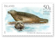 Le phoque annelé (Phoca hispida), seal stamp from Iceland