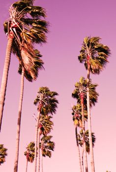 Pink palm sky