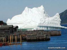 Massive Iceberg, Ming's Bight, NL <3