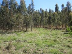 1430 ACRES /NORTHERN NSW / YOU HAVE 3 WEEKS TO PURCHASE AT THIS PRICE!!