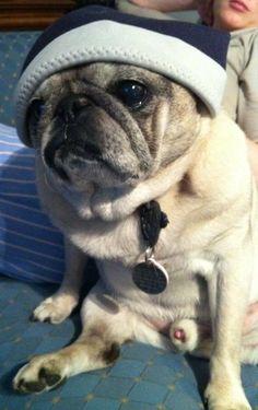 Pug Thug!