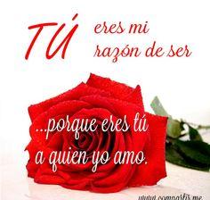 Imagenes Bonitas De Amor Con Rosas Y Frases Romanticas For You
