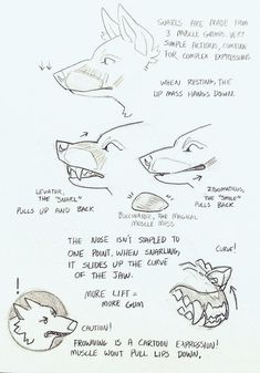 """""""How I do snarls! A quick collection of notes to help you do snarls too! Anatomy Reference, Art Reference Poses, Drawing Reference, Drawing Techniques, Drawing Tips, Drawing Sketches, Pencil Sketching, Animal Sketches, Animal Drawings"""
