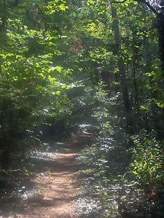 Im Wald, da geht es mir so richtig gut, bin ich mal erschöpft und ausgelaugt, geh ich in den Wald und schöpfe neuen Mut, frische Luft einatmen, für vieles der Wald taugt. Pflanzen, Baum und Tier gibt er Lebensraum, lebe weiter mein Wald und nicht nur...