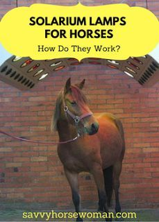 Solarium Lamps for Horses - How Do They Work? Horse Dance, Horse Treats, Horse Care Tips, Horse Saddles, Western Saddles, Horse Grooming, Barrel Horse, Equestrian Problems, Horse Trailers