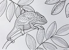 E Feb C F C Cb F C My Drawings also Chameleon Coloring Pages Free Printables Momjunction A D Add additionally A F D Bcff Eca Baae Tot School Free Printables moreover C D D C Dea Ead E Ac E together with A E B F A Fb D Teacher Worksheets Basic Math. on chameleon coloring page chameleons worksheets and kindergarten
