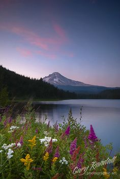 Trillium Lake, Oregon - Flowers in the foreground, Mount Hood in the background