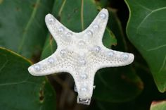 Bridal white knobby starfish with pearl accent hair clip