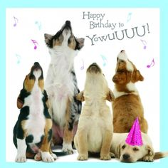 Dogs howling happy birthday to you Birthday Posts, Happy Birthday Meme, Happy Birthday Pictures, Happy Birthday Messages, Happy Birthday Greetings, Dog Birthday Quotes, Happy Birthday Male Friend, Happy Birthday Quotes For Her, Happy Birthday Wishes For Her