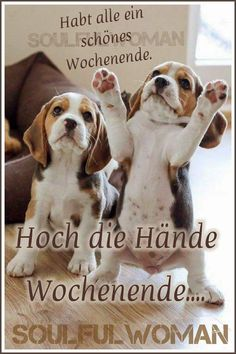 Dogs, Animals, App, Sweet, Good Morning Funny, Good Night, Citations Humour, Deep Quotes, Baby Sayings