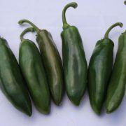Hot Met F1 paprika: Chili típusú paprika. Termése sötétzöld hegyesedő, 10-13 cm hosszú, igen csípős. Erőteljes növekedésű, bőtermő, könnyű szedni. Hot, Chili, Stuffed Peppers, Vegetables, Chile, Stuffed Pepper, Vegetable Recipes, Chilis, Stuffed Sweet Peppers
