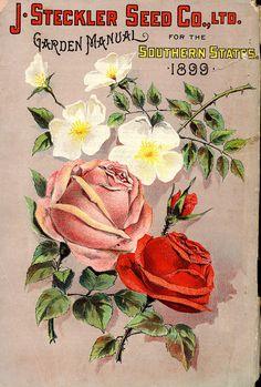 Lovely seed packet   SIL08-09314-b.jpg