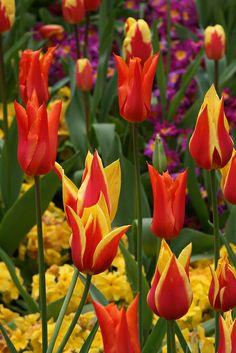 Spring Flowers, Scotland