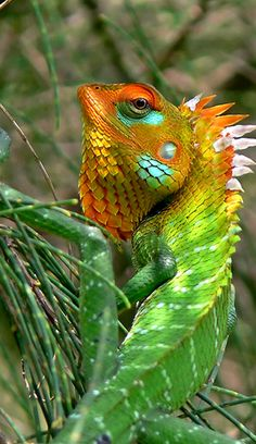 √ 5 Different Types of Chameleons - cards -You can find Chameleons and more on our website.√ 5 Different Types of Chameleons - cards - Reptiles Et Amphibiens, Mammals, Beautiful Creatures, Animals Beautiful, Beautiful Beautiful, Beautiful Pictures, Types Of Chameleons, Animal Original, Animals And Pets