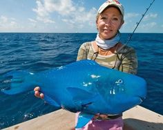 Blue Parrot Fish can be found in the Atlantic Ocean and spends 80% of its time searching for food.