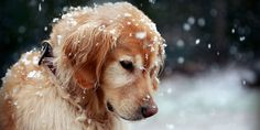 Snow Dog Twitter Cover & Twitter Background | TwitrCovers
