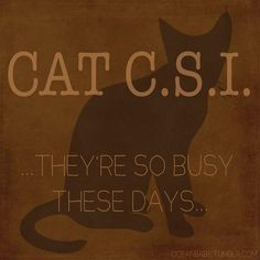 """""""I fear you flatter my knowledge of cat pathology."""" - Douglas. HAHAHA Loved this part... Cabin Pressure."""