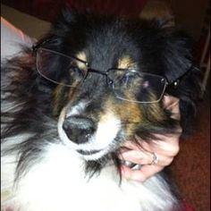 Smart puppy doggie