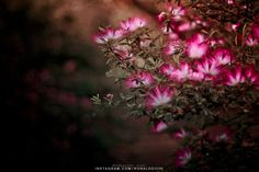 Flores do Ibirapuera #flores #flowers #ibirapuera #park #nature #photography #fotografia #purple