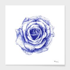Ballpoint Blue Rose Art Print by ronnkools Ballpen Drawing, Ballpoint Pen Drawing, Pen Sketch, Sketches, Plant Drawing, Rose Art, Crayon, Fine Art Paper, Framed Art Prints