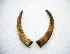 """7-9"""" Goat Horns Matched Pair Set taxidermy real bone sheep antler horn. $13.95, via Etsy."""