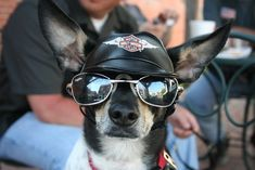 Love the biker look, bad to the puppy BONE!