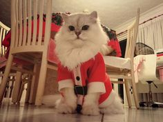 insolite chat costume noel pere