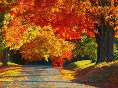Charlottesville, VA Beautiful Artwork, Beautiful Places, Beautiful Pictures, Fall Pictures, Fall Photos, All Falls Down, Virginia Is For Lovers, Autumn Photography, Fall Halloween