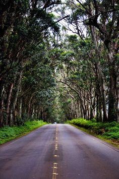 ˚Road to Poipu (The Tree Tunnel)- Kauai, Hawaii---beautiful drive! Kauai Vacation, Vacation Places, Hawaii Travel, Dream Vacations, Vacation Spots, Poipu Kauai, Kauai Hawaii, Oahu, Hawaii Life