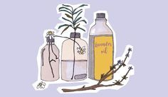 The Top 3 Essential Oils: These Strengthen Your Immune System